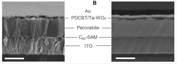 A) Scanning electron microscopy (SEM) image of cross-section of a complete perovskite device based on ITO/C60-SAM/Perovskite/PDCBT/Ta-WOx/Au, the scale bar of 500 nm. (B) Corresponding SEM image of a focused ion beam (FIB) polished cross-section, the scale bar of 500 nm.